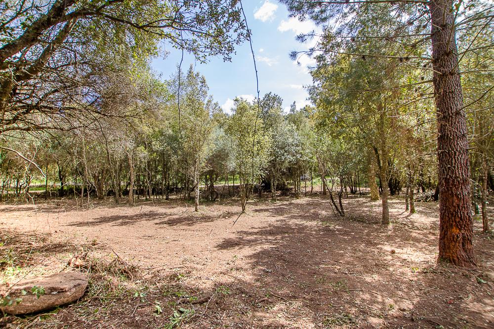 Vente terrain de 2000 m² à Lecci
