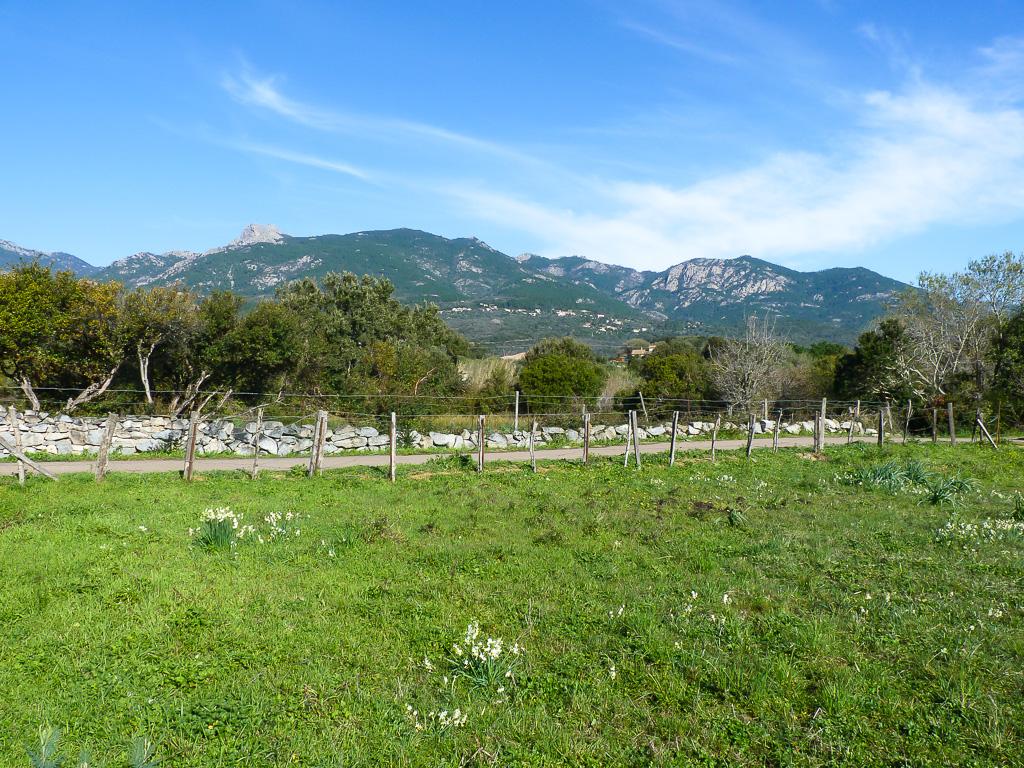 Vente joli terrain à Sotta